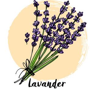lavander